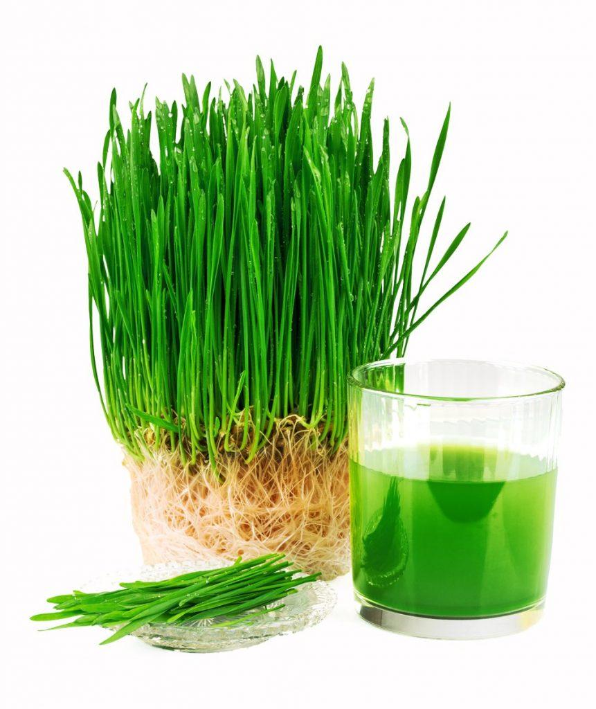 psenicna trava